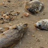 """""""Ăn bớt"""" gạo của ngư dân được hỗ trợ vì cá chết"""