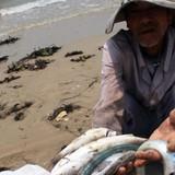 [Infographic] Diễn tiến điều tra nguyên nhân vụ cá chết ở miền Trung