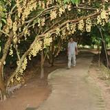 Tự tạo cơ hội: Làm du lịch từ vườn dâu cao sản