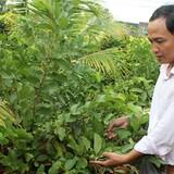 Dịch vụ mua trái cây sạch tại vườn ở Sài Gòn