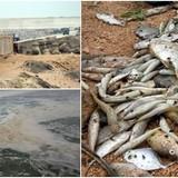 <span class='bizdaily'>BizDAILY</span> : Vụ cá chết ở miền Trung: Bao giờ thì rõ nguyên nhân?