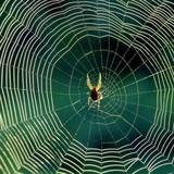 """""""Mạng nhện"""" sở hữu chéo ngân hàng đã gỡ đến đâu?"""