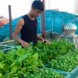 Nở rộ dịch vụ trồng rau tại nhà