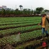 Phun hơn 100.000 tấn thuốc sâu Trung Quốc vào rau, hỏi sao người Việt không bị đầu độc?