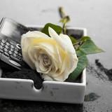 BlackBerry chính thức xác nhận ngừng sản xuất điện thoại
