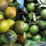 Khắp nơi cam Tàu, phân biệt đặc sản cam Việt thế nào?