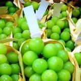 Đua nhập trái cây lạ giá tiền triệu về bán