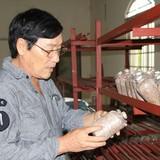 Tự tạo cơ hội: Về miền Tây trồng nấm