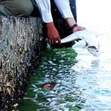 Cá chết hàng loạt tại vùng biển Khánh Hòa