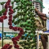 Sri Lanka phá kỷ lục Guinness về cây thông Noel cao nhất thế giới