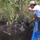 [Video] Vào rừng U Minh giăng lưới bắt cá sặc