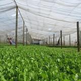 8 nông sản giúp nông dân thu tiền tỷ mỗi năm