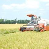 Lúa gạo tồn kho, dân lo... cứu trợ