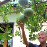 [Video] Cuộc sống vườn tược của nguyên Phó thủ tướng Trương Vĩnh Trọng