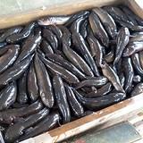 Thu tiền tỷ mỗi năm nhờ nuôi cá bống bớp