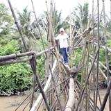 [Video] Cầu khỉ 100 trụ tre ở miền Tây