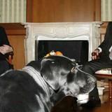 Những lãnh đạo thế giới từng tặng chó quý cho ông Putin
