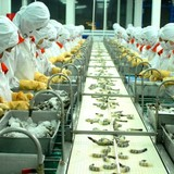 VASEP: Tôm Việt sẽ khởi sắc tại thị trường Mỹ trong năm tới