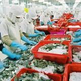 """VASEP: Năm 2016, xuất khẩu tôm sang EU """"hứa hẹn"""" khởi sắc"""