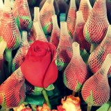 Giá hoa tăng vọt, hoa nhập ngoại tiền triệu được săn lùng ngày 8/3