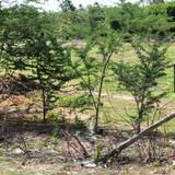 TP.HCM: Thu hồi hơn 1.600 ha đất trong năm 2015