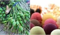 Thị trường 24h: Săn cau non xuất đi Trung Quốc, người Việt tiêu thụ gần 73 tấn kem/ngày