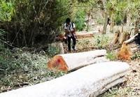 """Gia Lai: Báo cáo mất 240ha rừng """"do dân lấn chiếm"""""""