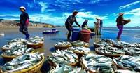 Tháng 5: EU sẽ sang Việt Nam kiểm tra về khai thác thuỷ sản