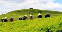 [TekINSIDER] Cầu Đất Farm: Khi nông nghiệp thông minh cạnh tranh với canh tác truyền thống