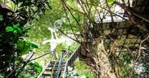 Những ngôi nhà trên cây độc nhất vô nhị ở Việt Nam