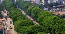 Hà Nội bắt đầu di dời hơn 1.000 cây ở đường Phạm Văn Đồng