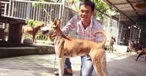 Chàng trai 8X nuôi cơ ngơi chó Phú Quốc thu hàng trăm triệu đồng ở Sài Gòn