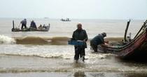 Trúng đậm mùa moi biển, ngư dân Thanh Hóa thu tiền triệu mỗi ngày