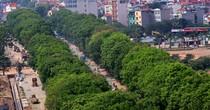 <span class='bizdaily'>BizDAILY</span> : Hà Nội chặt hạ 1.300 cây xanh để làm đường