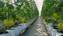 """Sắp có chính sách """"đặc thù"""" để khuyến khích doanh nghiệp rót vốn vào nông nghiệp?"""