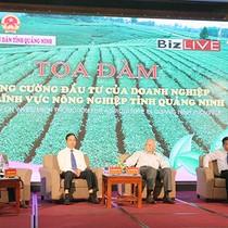 Nông nghiệp Quảng Ninh hút đầu tư