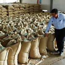 Đề nghị truy tố nguyên Phó tổng giám đốc Tổng công ty cà phê Việt Nam