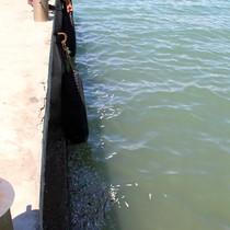 Thủy triều đỏ khiến cá chết hàng loạt ở Khánh Hòa