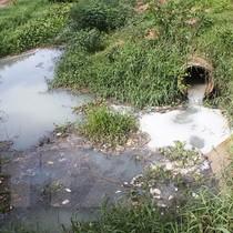 Phạt hơn 160 triệu đồng công ty xả nước ra sông Vàm Cỏ Đông