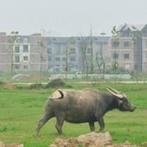 Chuyển mục đích sử dụng hàng trăm hécta đất trồng lúa tại 2 tỉnh Bắc Ninh, Long An