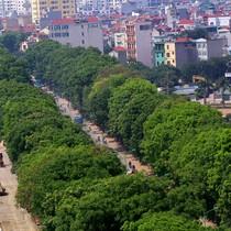 1.300 cây xanh trước ngày chặt hạ để làm đường ở Hà Nội