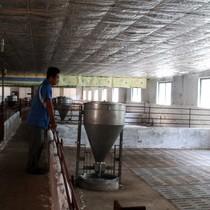 2 tháng giải cứu, nông dân bỏ chuồng, giá heo Đồng Nai vẫn không tăng