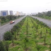 """Hà Nội: Nguy cơ cỏ mọc thành... """"rừng"""" trên một số tuyến đường"""