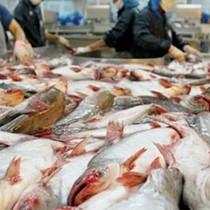 Bộ Công Thương: Mỹ bảo hộ quá mức với cá tra, cá basa