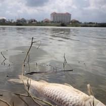 Quảng Nam: Cá chết bất thường nổi trên sông Bàn Thạch