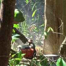 Vội vã đốn rừng làm dự án nuôi bò