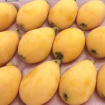 Biwa 4 triệu/kg: Quả lạ mới xuất hiện trên thị trường