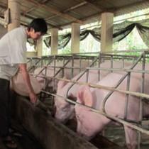 """Thị trường 24h: Người dân hy vọng """"sóng"""" thịt lợn"""