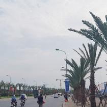 Dừng cắt cỏ, Hà Nội trồng cây to suốt dọc Đại lộ Thăng Long