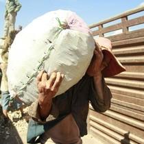 Nhiều nông dân thoát nông vì càng sản xuất càng lỗ